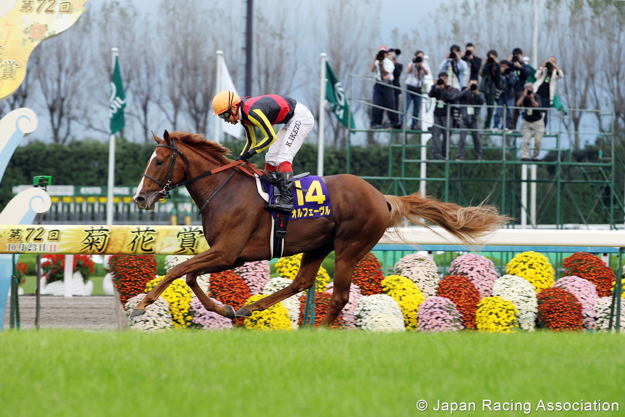 Orfevre in the G1 Kikuka Sho (Japanese St. Leger). Photo: JRA.
