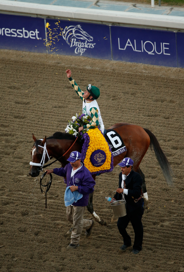Mucho Macho Man and Gary Stevens after their win in the 2013 Breeders' Cup Classic. Photo: Breeders' Cup/Todd Buchanan 2013.
