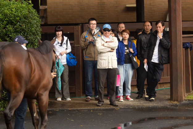 Hong Kong racing personality Apollo Ng inspects a yearling at the 2013 Easter Sale. Photo: William Inglis & Son.