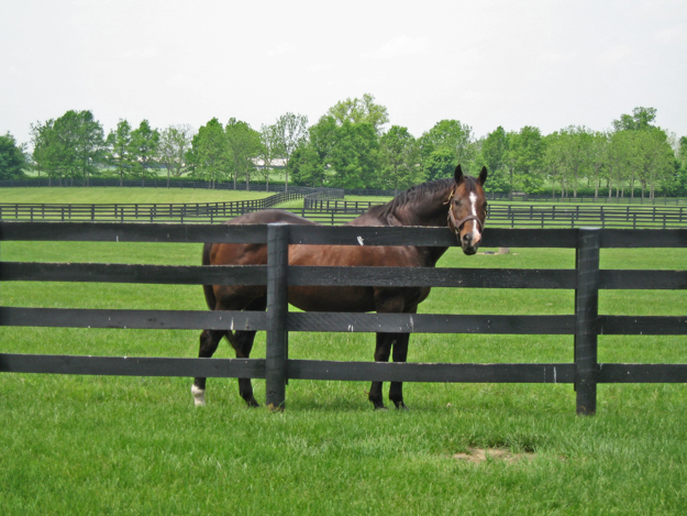 A.P. Indy enjoys retirement at Lane's End. Photo:Lane's End Farm