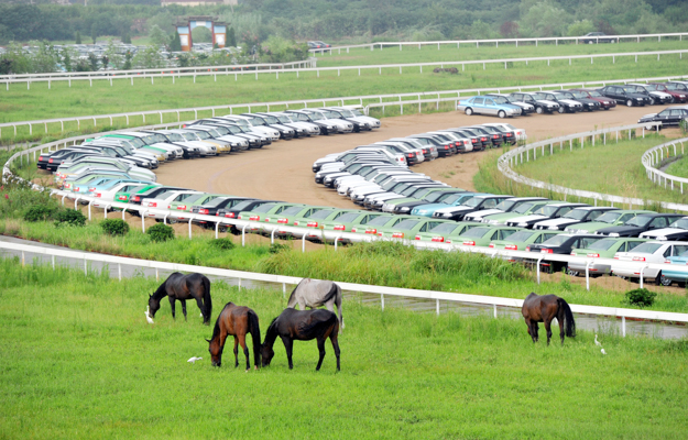 Horses graze around parked cars at Nanjing International Racecourse. Photo: Imaginechina.