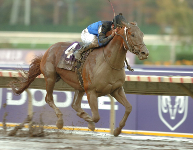 Curlin and jockey Robby Albarado win the 2007 Breeders' Cup Classic on a sloppy track at Monmouth Park. Photo: Breeders' Cup.