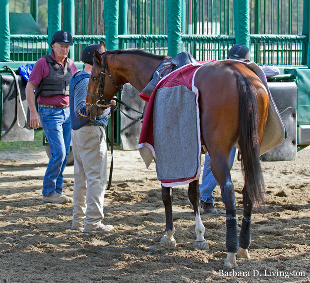 Bob Dundan and crew work with I Spent It at the starting gate. Photo: Barbara D. Livingston.