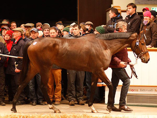 A British auction record was broken when Just The Judge sold for 4.5 million guineas at Tattersalls. Photo: Tattersalls.