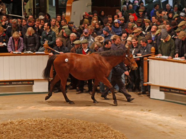 Immortal Verse by Pivotal was puchased by BBA Ireland for 4,700,000 guineas ($8,088,465) at Tattersalls 2013 December Mare Sale. Photo: Tattersalls Ltd.