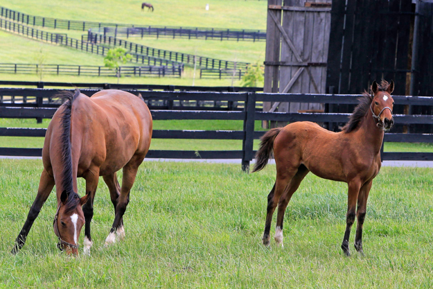 Love Me Only with her Smart Strike colt. Photo: Michele MacDonald