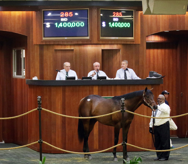 Hip 285, the 2015 OBS March sale topper, a $1.4 million Bernardini colt purchased by Live Oak Plantation. Photo: Photos by Z.