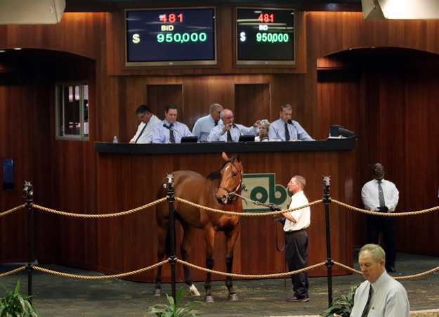 A 950,000 Broken Vow colt purchased by Linda Rice. Photo: Photos by Z.