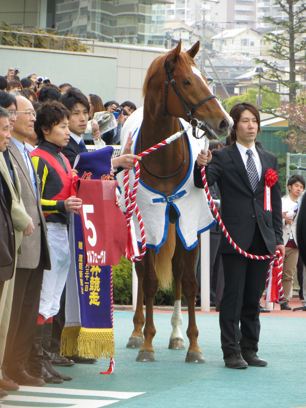 Orfevre in the winner's circle after the 2013 Sankei Osaka Hai. Photo: Wikimedia Commons.