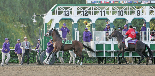 Quality Road escapes from the starting gate and is caught by the gate crew at the 2009 Breeders' Cup. Photo: Alysse Jacobs.