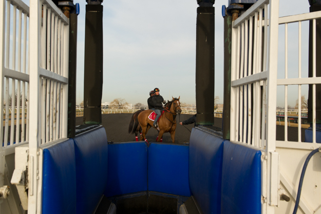 View of Woodbine's starting gate. Photo: Michael Burns.