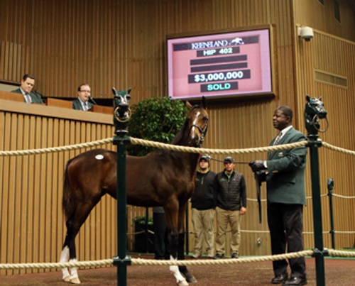 A Tapit filly set a new North American weanling record when she sold for $3 million at the Keeneland November Breeding Stock Sale. Photo: Keeneland.