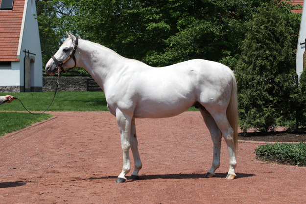 Tapit at Gainesway Farm. Photo: Gainesway Farm.