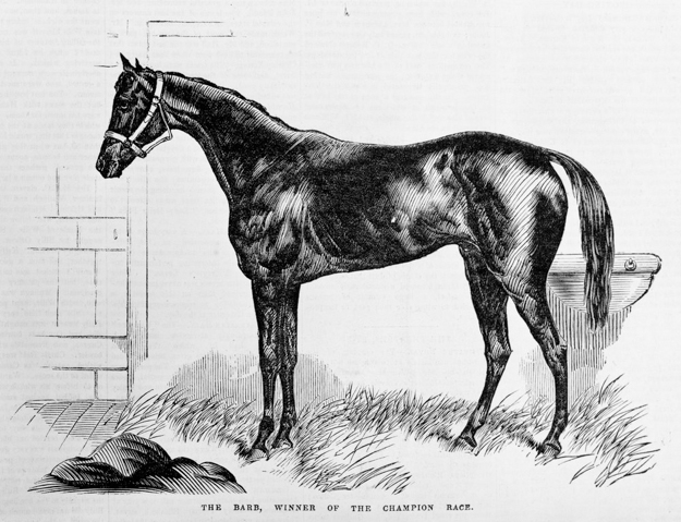 1866 Melbourne Cup winner The Barb. Supplied by State Library of Victoria.