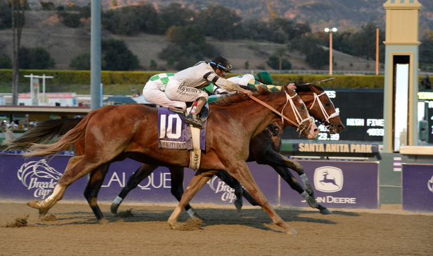 Will Take Charge was narrowly defeated by Mucho Macho Man in the 2013 Breeders' Cup Classic. Photo: © Breeders' Cup/Phil McCarten 2013
