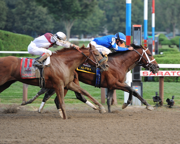 Alpha and Golden Ticket dead heat in the 2012 Travers Stakes. Photo: NYRA/Adam Coglianese.