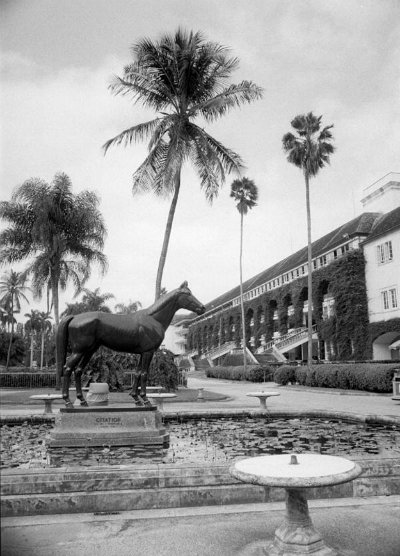 Citation the eighth American Triple Crown winner stands on sentry duty at the centre of the lily pool near the entrance of Hialeah Park's clubhouse. Provided by the State Archives of Florida.