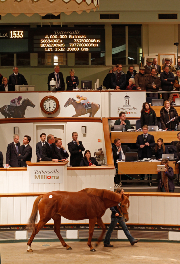 Dancing Rain by Danehill Dancer sold for 4,000,000 guineas ($6,892,299) to John Ferguson at the Tattersalls 2013 December Mare Sale. Photo: Tattersalls Ltd.