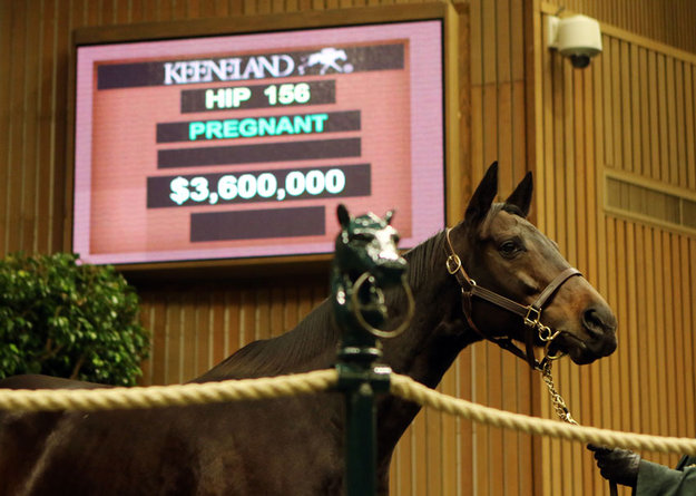 Naples Bay sold for $3.6 million in foal to War Front. Photo: Keeneland.