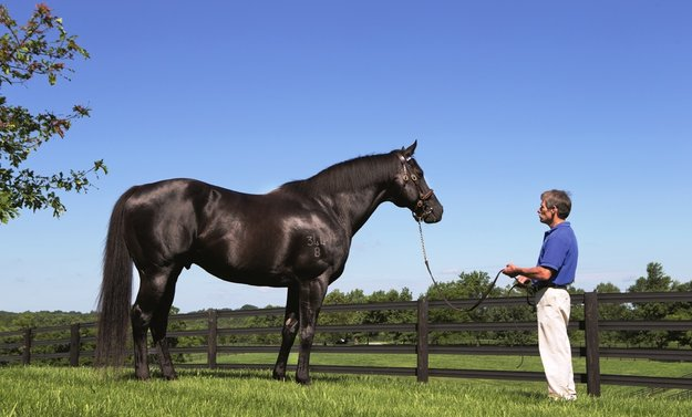 Lonhro at Darley's Jonabell Farm, Kentucky. Photo: Darley Australia.