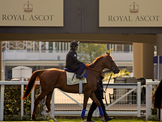 Animal Kingdom at Ascot before the 2013 Queen Anne Stakes. Photo: RacingFotos.com