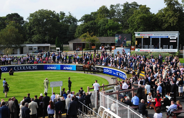 Goffs Champions Sale held before racing began at Leopardstown for Irish Champions Weekend. Photo: RacingFotos.com