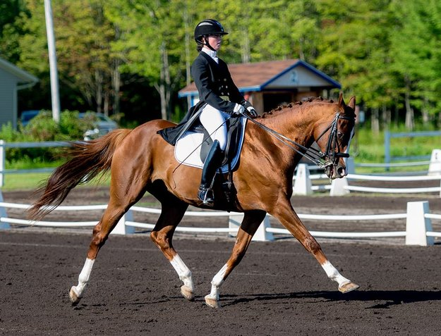 Gone Ballistic had 11 starts on the track. Now, he competes in Prix St. Georges-level dressage. Photo: Alexandra Gainer.