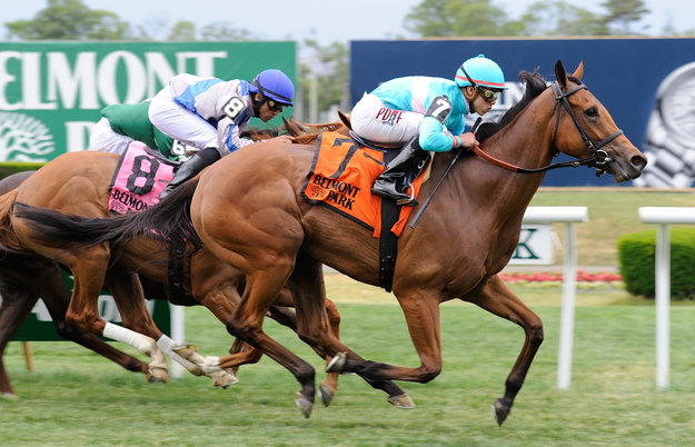 Lady Eli en route to victory in the Wonder Again stakes at Belmont Park on May 31. Photo: NYRA/Adam Coglianese.