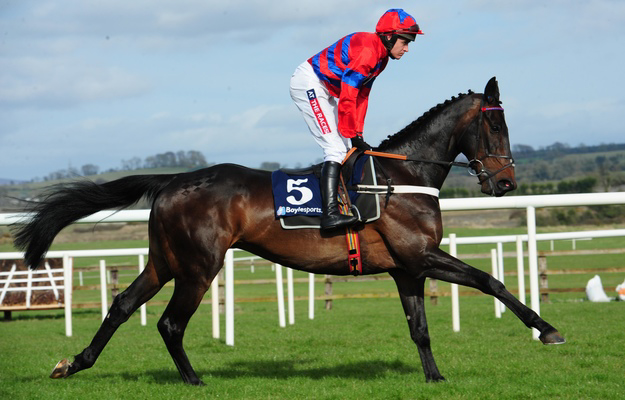 Sprinter Sacre, a Selle Francais gelding who is one of the top steeplechase horses in the world, is a graduate of the AQPS Decize show. Photo: RacingFotos.com