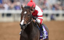 The Hollendorfer masterclass: making sure Songbird continues to thrive