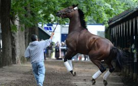 Pride, heartbreak and a mind-boggling electricity: the week American Pharoah came to town