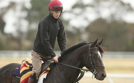 O'Brien's bold move in sending classy Adelaide on Cox Plate mission