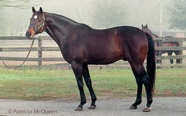 Children of Secretariat: 'crazy' horse who got him off the mark as a G1 sire
