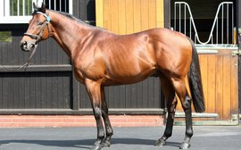 Supersire Dubawi goes from strength to strength