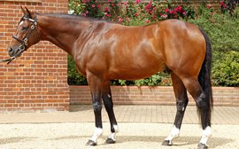 Expectations sky high as Frankel's first yearlings are set to go through the ring