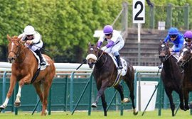 Top French 3-year-old Gailo Chop pointed for inaugural Belmont Derby