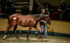 Business booms as big buyers flock to Goffs Orby Sale from all over the world