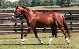 Children of Secretariat: the 'gorgeous' G1 colt who couldn't take the pressure
