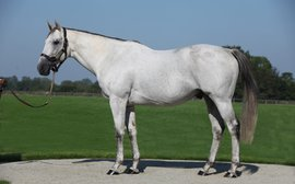 Kendargent: The champion sire that wasn't meant to be