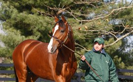 New year brings new blood to North American stallion ranks