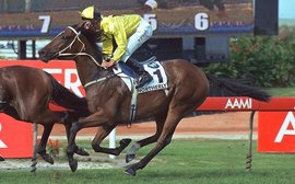 My favorite racehorse: Northerly