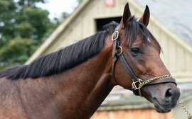 The superstar colts boosting America's stallion ranks