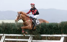 Coaxing the Kiwis to Australia's jumps races