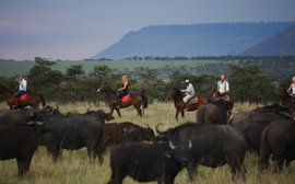 From post to picket line: Retired African racehorses on safari