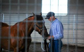 WarHorse program building a bond between veterans - human and equine