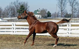 Still lithe at 15, Smarty Jones is all set for his second chance in Kentucky