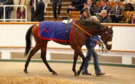 Tattersalls Craven Sale holds position in increasingly selective market