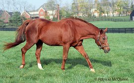 Children of Secretariat: the flying filly responsible for Storm Cat