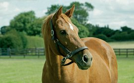 Why Urban Sea may be the most influential matriarch in Thoroughbred history