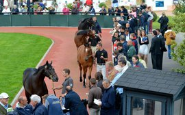 Yearling sales going from strength to strength as Deauville market flourishes